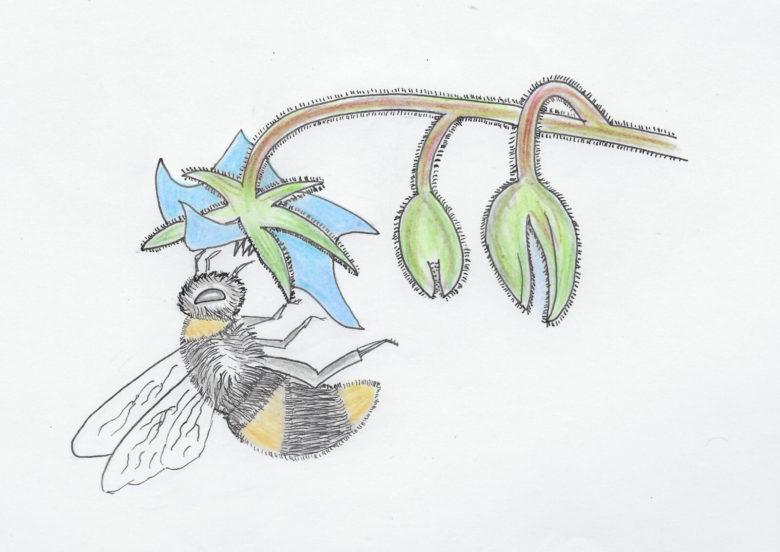 bee on a flower hand drawn